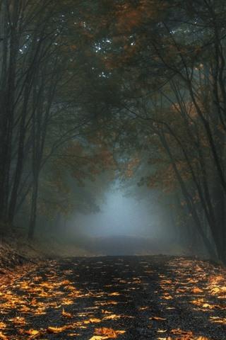 iPhone Fondos de pantalla Árboles, hojas, camino, canal, niebla, mañana, otoño