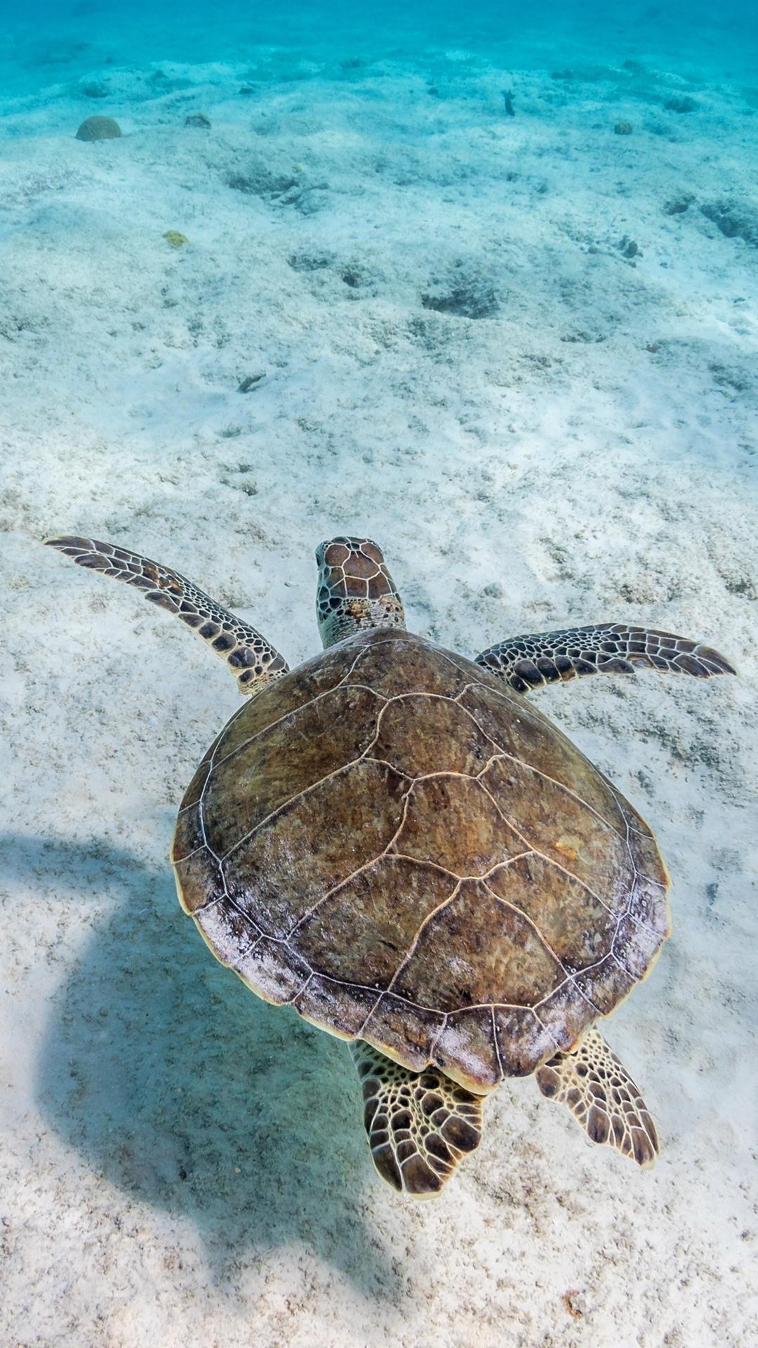Turtle, underwater, sea, clear water