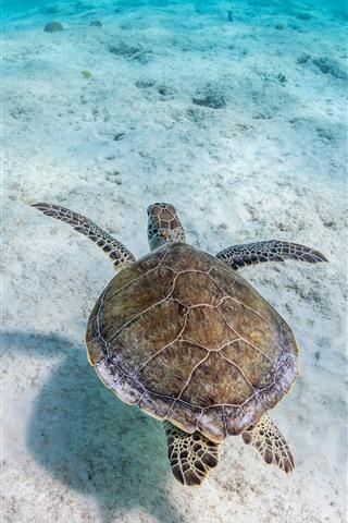 iPhone Wallpaper Turtle, underwater, sea, clear water