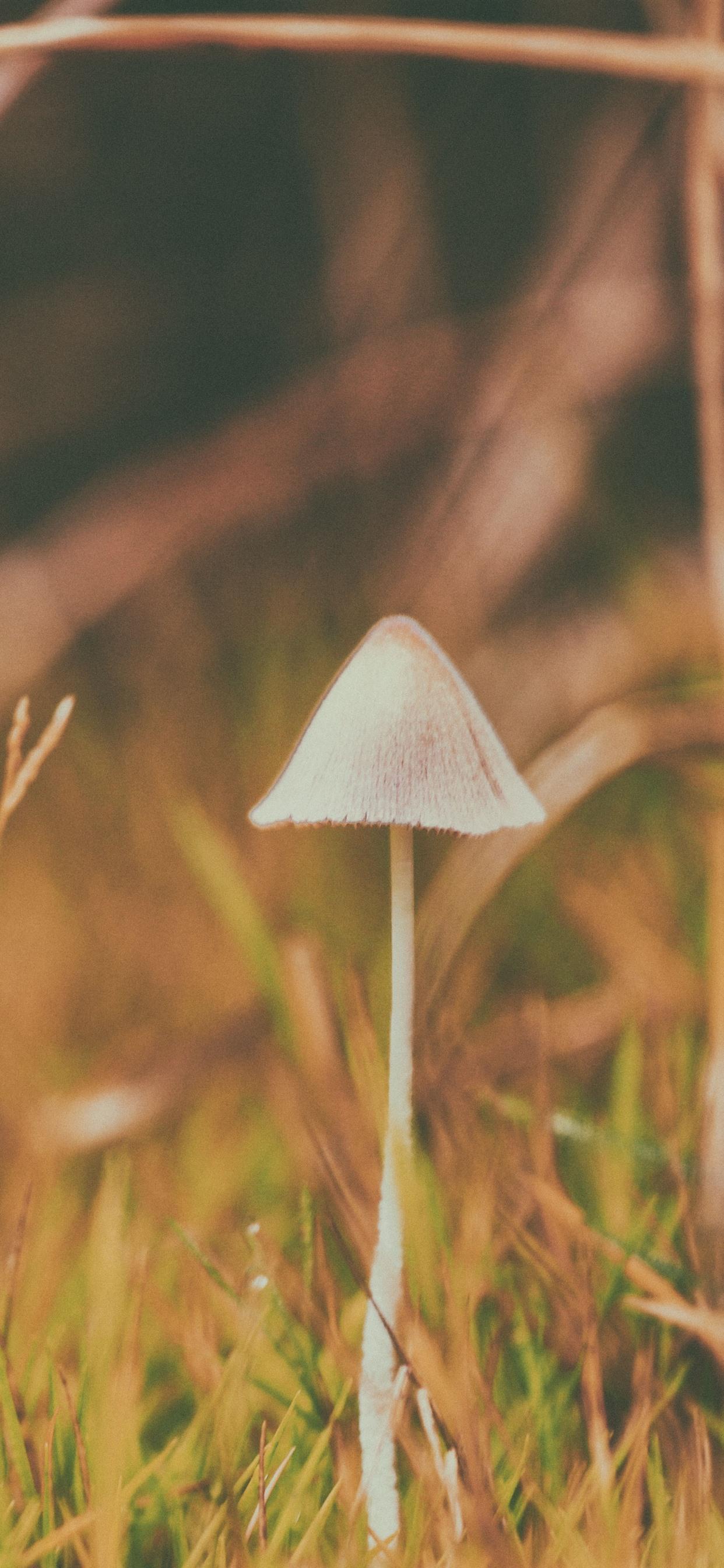 White Mushroom Yellow Grass 1242x2688 Iphone Xs Max