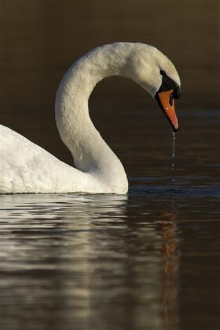 iPhone Fondos de pantalla Cisne blanco, agua, lago