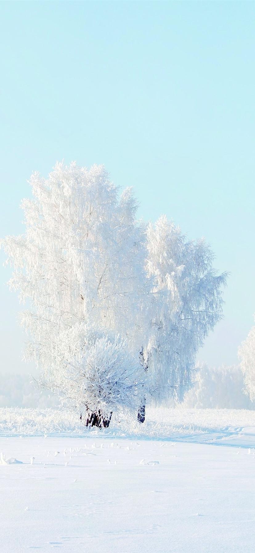 Wallpaper White world, trees, snow ...