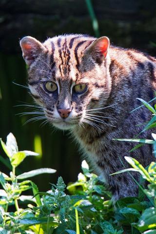 iPhone Fondos de pantalla Gato salvaje mirar hacia atrás, plantas, verde