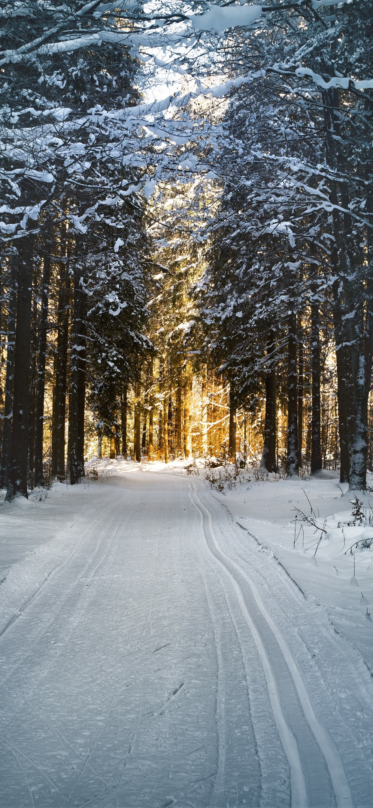 Winter Trees Path Snow Sunshine 1242x2688 Iphone Xs Max