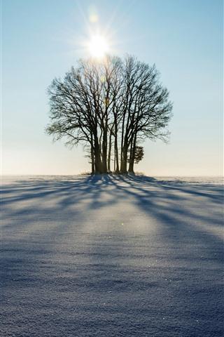 iPhone Wallpaper Winter, trees, sunshine, shadow, snow