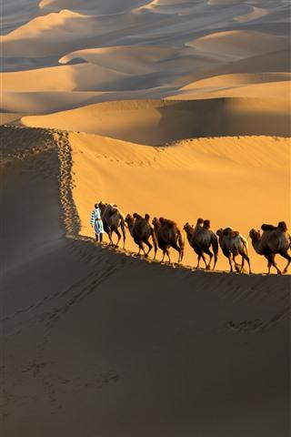 iPhone Wallpaper Xinjiang Kumtag Desert, camel, China