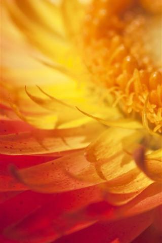 iPhone Wallpaper Yellow flower macro photography, petals, pistil