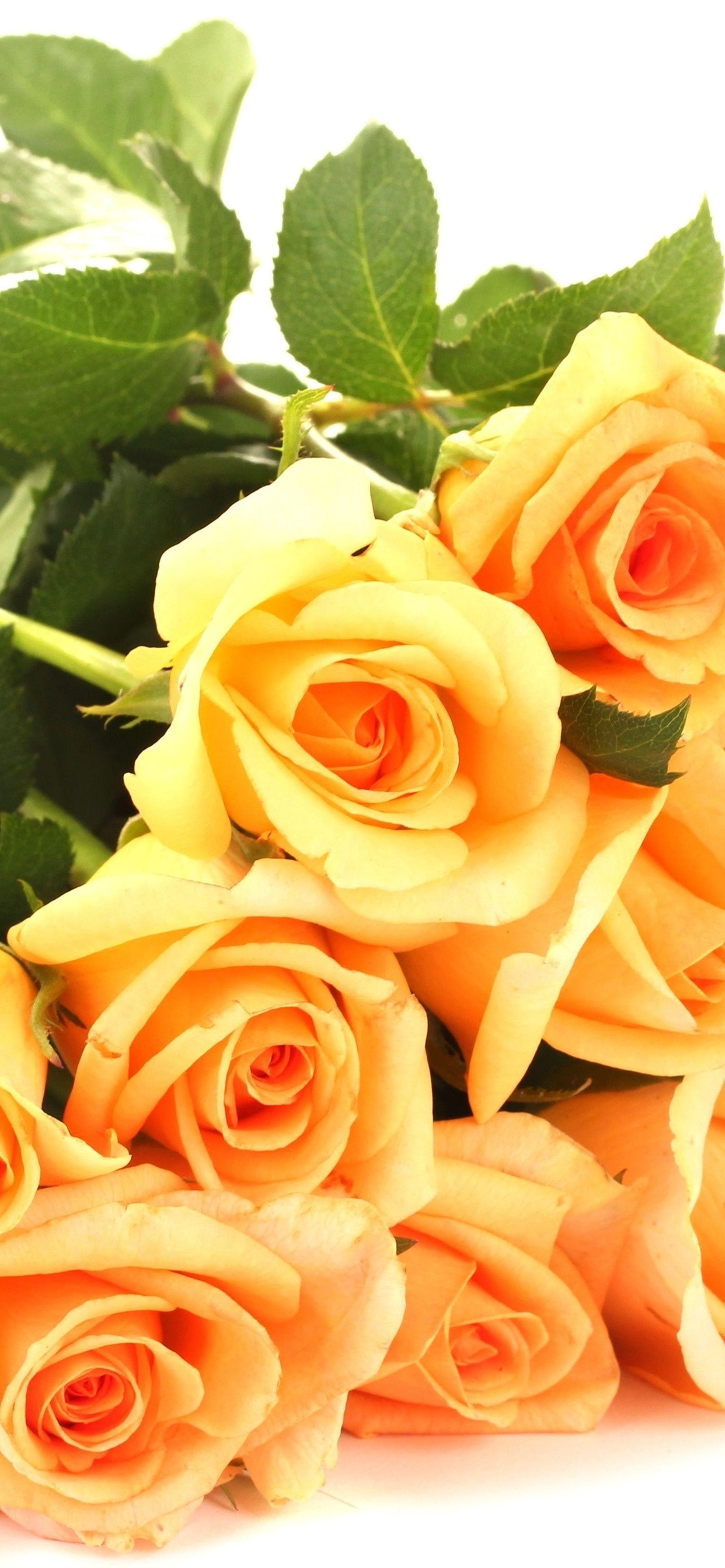Yellow Roses White Background 1242x2688 Iphone 11 Pro Xs Max Wallpaper Background Picture Image