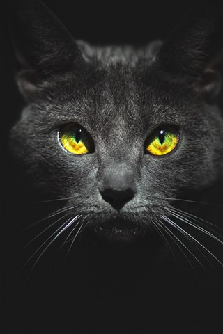 iPhone Wallpaper Black cat, face, yellow eyes, darkness