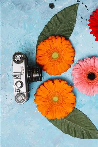 iPhone Wallpaper Camera and gerbera flowers
