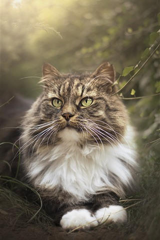 iPhone Wallpaper Cat in the nature, hazy