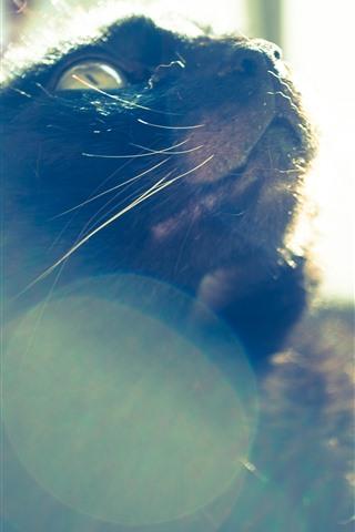 iPhone Wallpaper Cat look up, sunlight