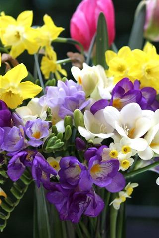iPhone Wallpaper Colorful flowers, bouquet, tulips, daffodils, freesia
