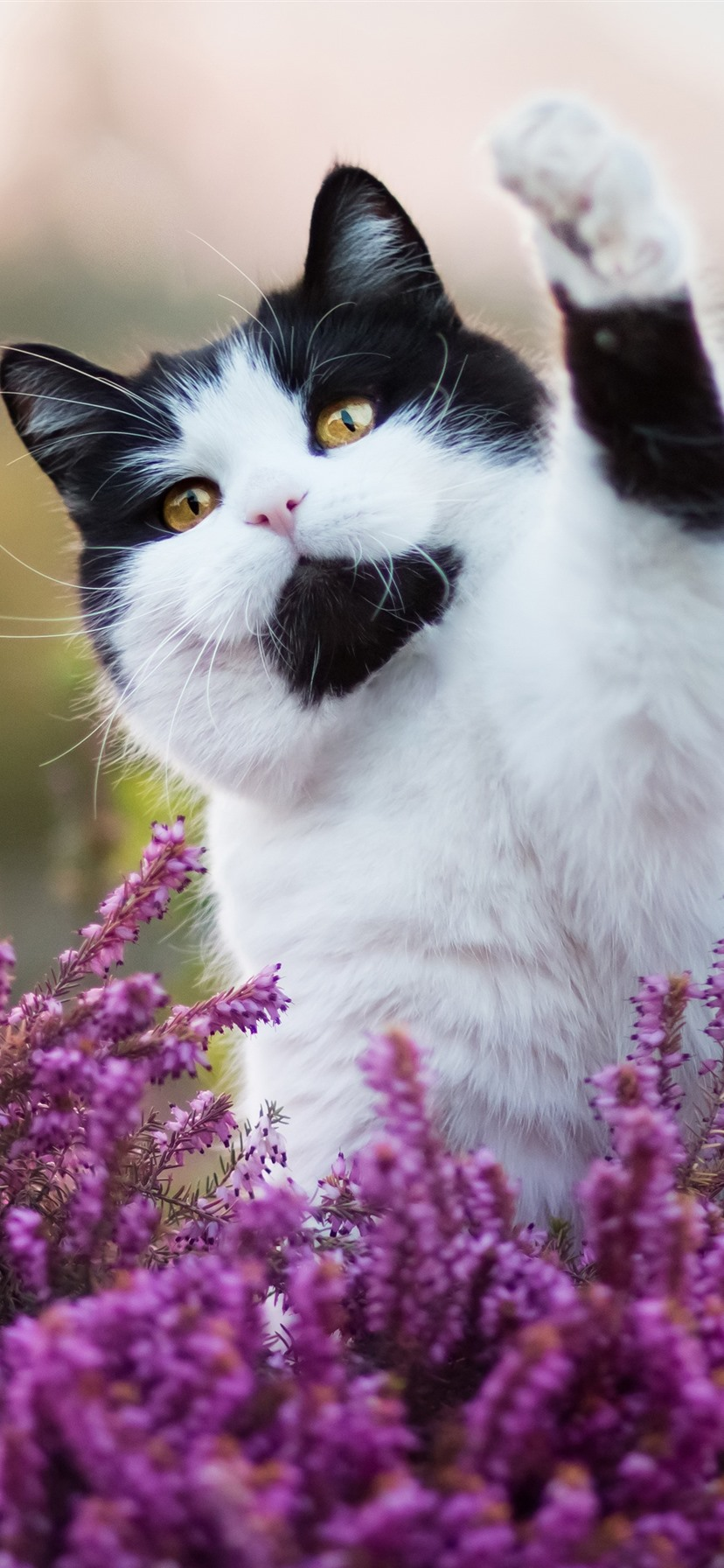 Wallpaper Cute Cat Pink Flowers Hello Funny Animal 3840x2160 Uhd 4k Picture Image