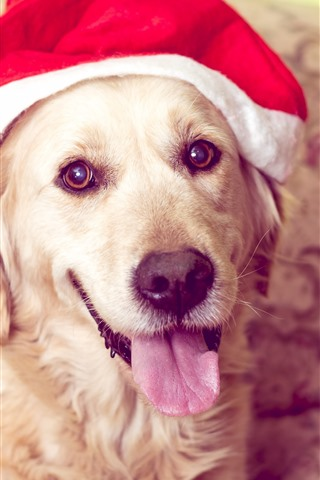 iPhone Wallpaper Cute dog, look, Christmas hat