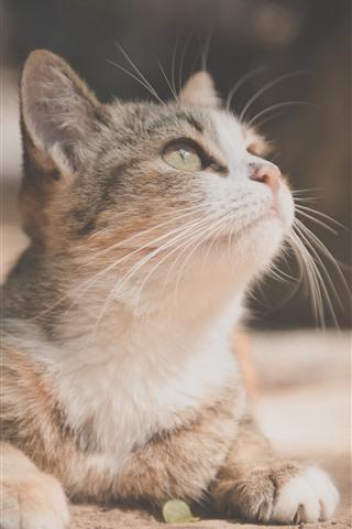 iPhone Wallpaper Cute kitten look up, pet