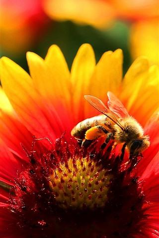 iPhone Wallpaper Flower, petals, bee