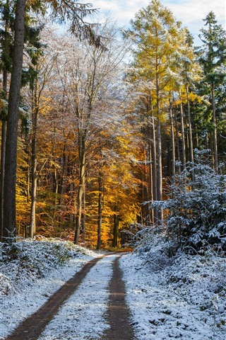 iPhone Wallpaper Forest, trees, path, snow, winter