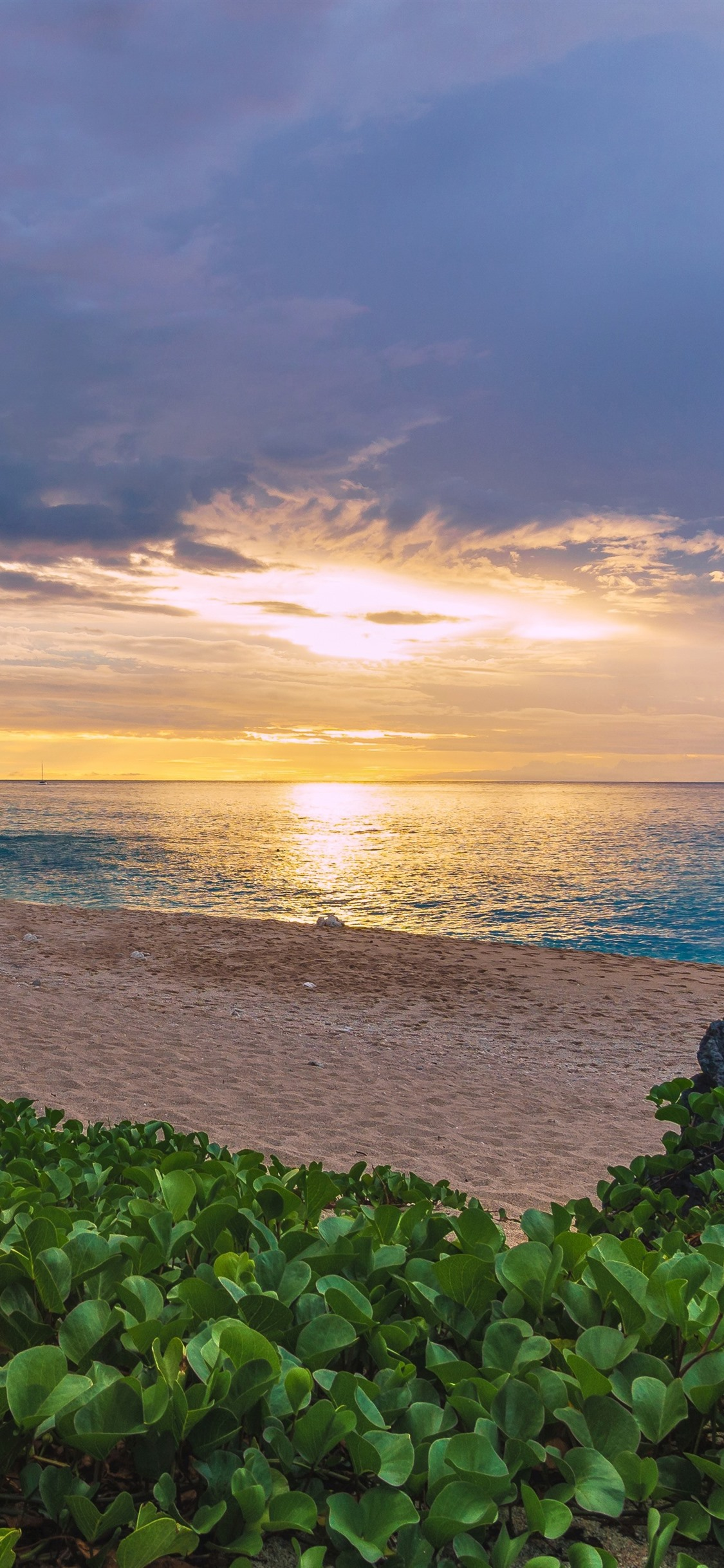 France Indian Ocean Sea Beach Palm Trees Plants Sunset 1242x2688 Iphone 11 Pro Xs Max Wallpaper Background Picture Image