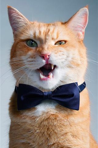 iPhone Wallpaper Funny cat, bowtie