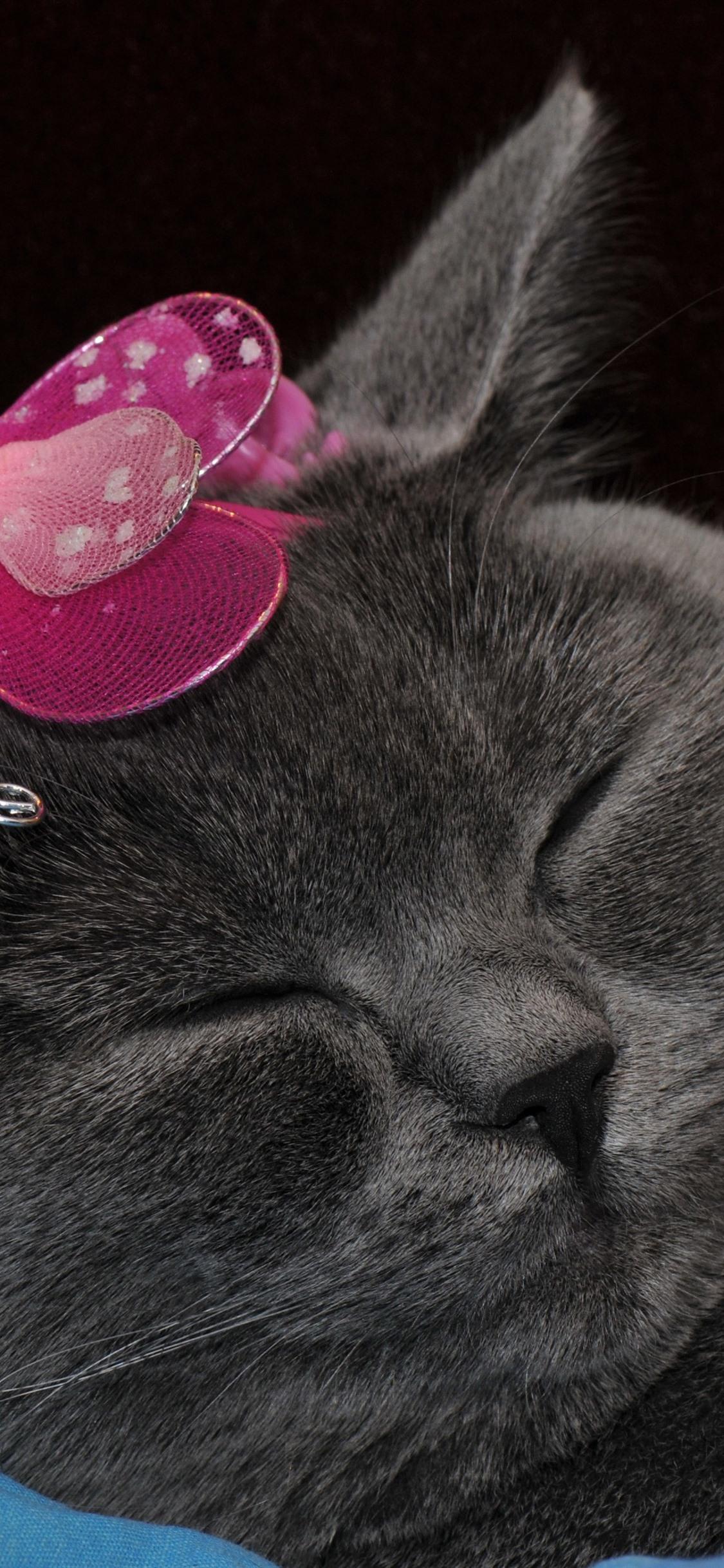 壁紙 面白い灰色猫 蝶飾り 3840x2160 Uhd 4k 無料のデスクトップの背景 画像