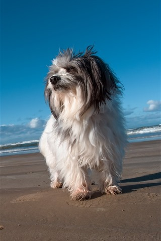 iPhone Wallpaper Furry puppy, beach, sea