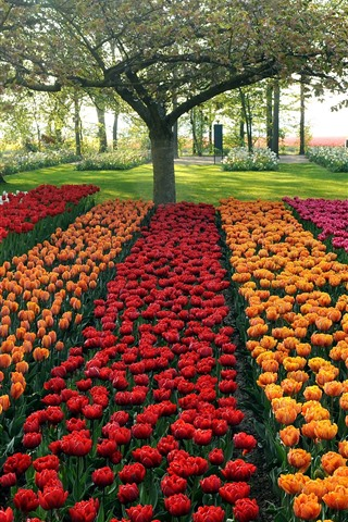 iPhone Wallpaper Garden, colorful tulips, trees