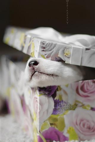 iPhone Wallpaper Gift, box, puppy