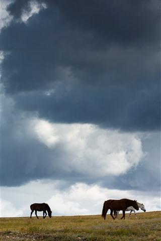 iPhone Wallpaper Grassland, horses, clouds, sky