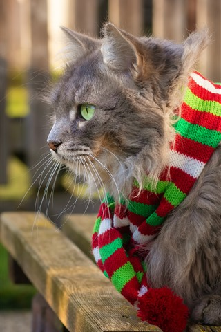 iPhone Wallpaper Gray cat, green eyes, scarf