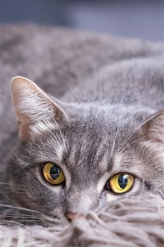 iPhone Wallpaper Gray cat, yellow eyes, rest