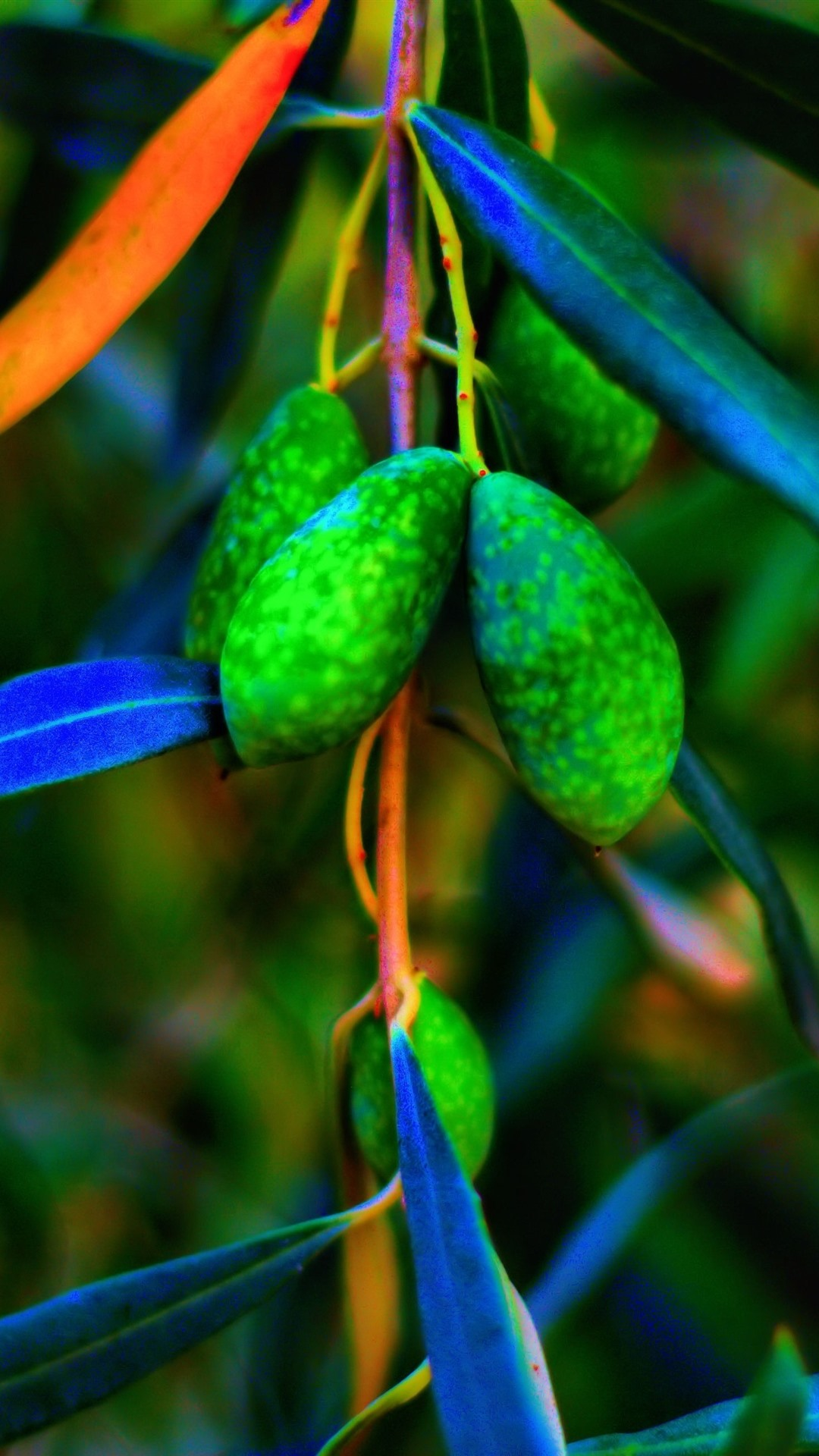 Green Olives Leaves 1125x2436 Iphone 11 Pro Xs X Wallpaper Background Picture Image