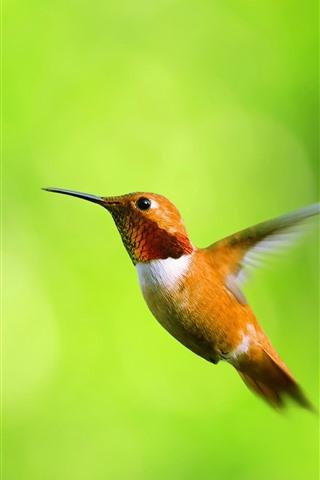 iPhone Wallpaper Hummingbird flight, green leaves