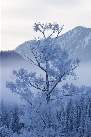 iPhone Wallpaper Kanas in the winter, trees, snow, beautiful nature landscape, China