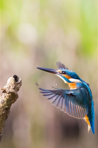 iPhone Wallpaper Kingfisher, flight, wings, wood stick