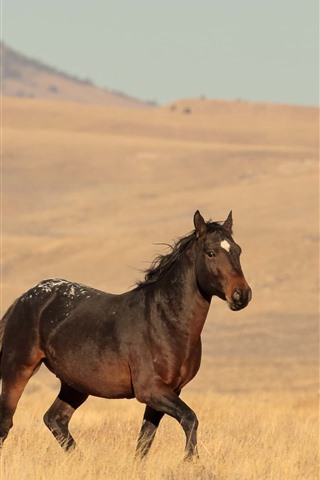 iPhone Wallpaper Lonely horse, grassland
