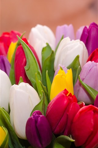iPhone Wallpaper Many tulips, colorful flowers, bouquet