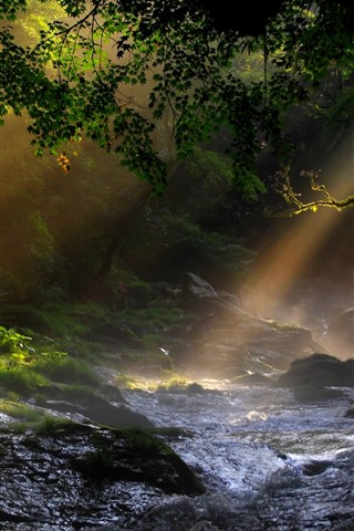 iPhone Wallpaper Nature, trees, creek, sun rays