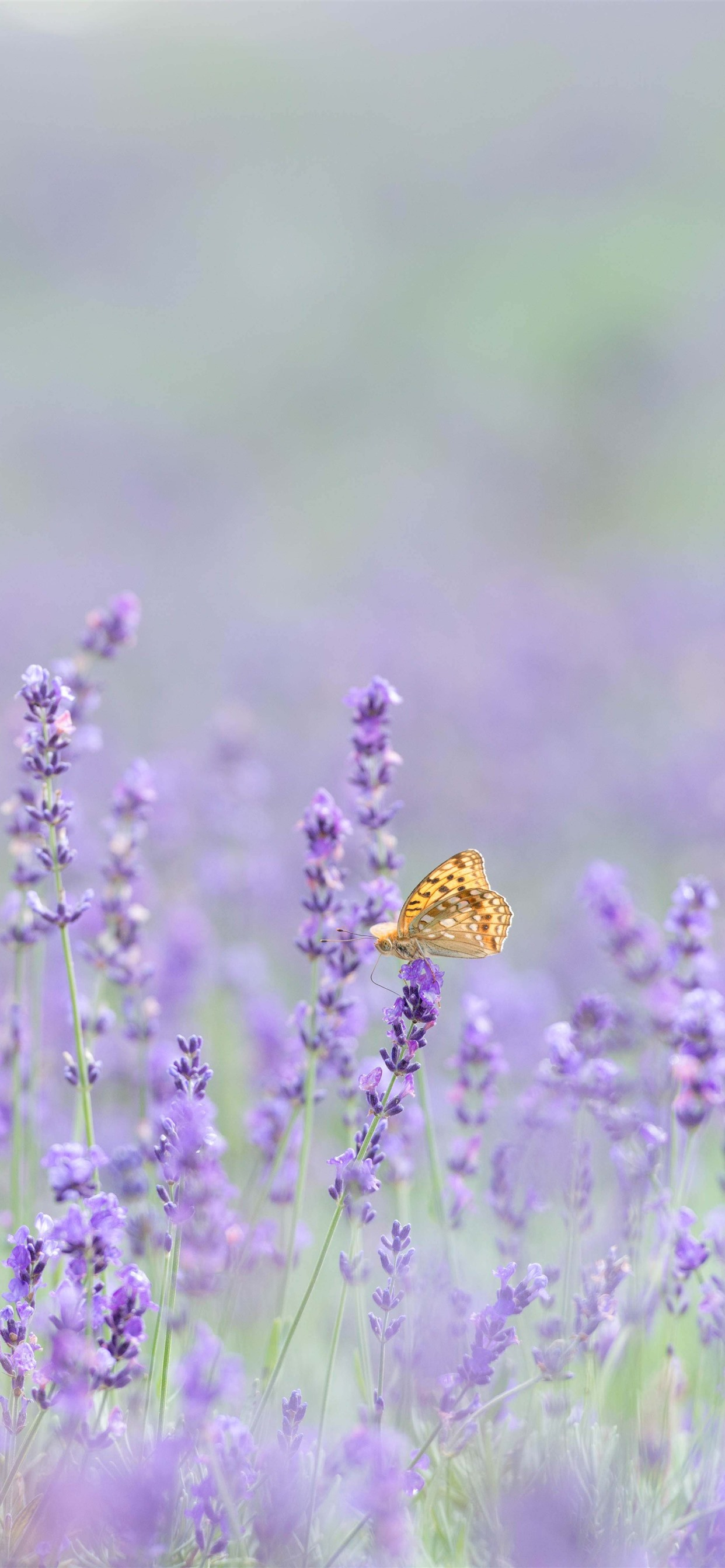 Pink Lavender Flowers Butterfly Hazy 1242x2688 Iphone 11 Pro Xs Max Wallpaper Background Picture Image