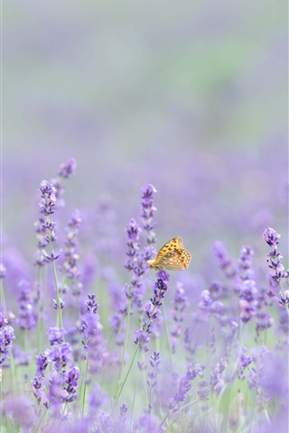 iPhone Wallpaper Pink lavender flowers, butterfly, hazy