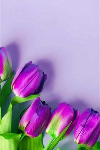 iPhone Wallpaper Purple tulips, flowers, light pink background