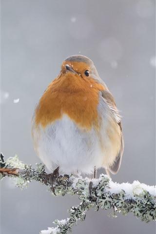 iPhone Wallpaper Robin, bird, snow, winter, tree branch