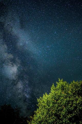 iPhone Wallpaper Starry, sky, night, tree, green leaves