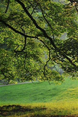 iPhone Wallpaper Summer, tree, green leaves, meadow, fog, sun rays