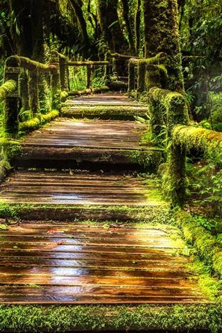 iPhone Wallpaper Thailand, Doi Inthanon National Park, jungle, moss, path, trees