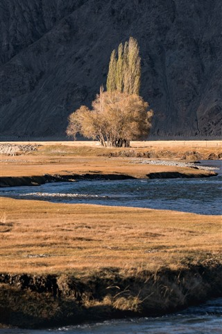 iPhone Wallpaper Tree, river, Pamirs