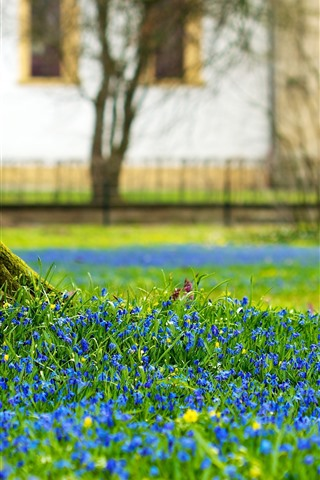 iPhone Wallpaper Tree trunk, blue flowers, spring