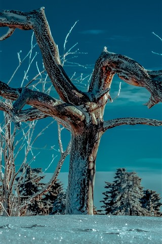 iPhone Wallpaper Tree, twigs, snow, winter