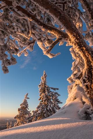 iPhoneの壁紙 木、雪、冬、自然の風景