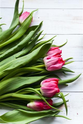 iPhone Wallpaper Tulips, roses, macaron